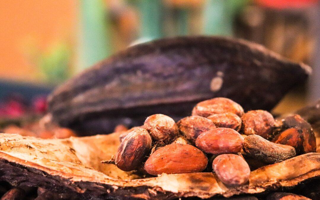 Menudo cacao